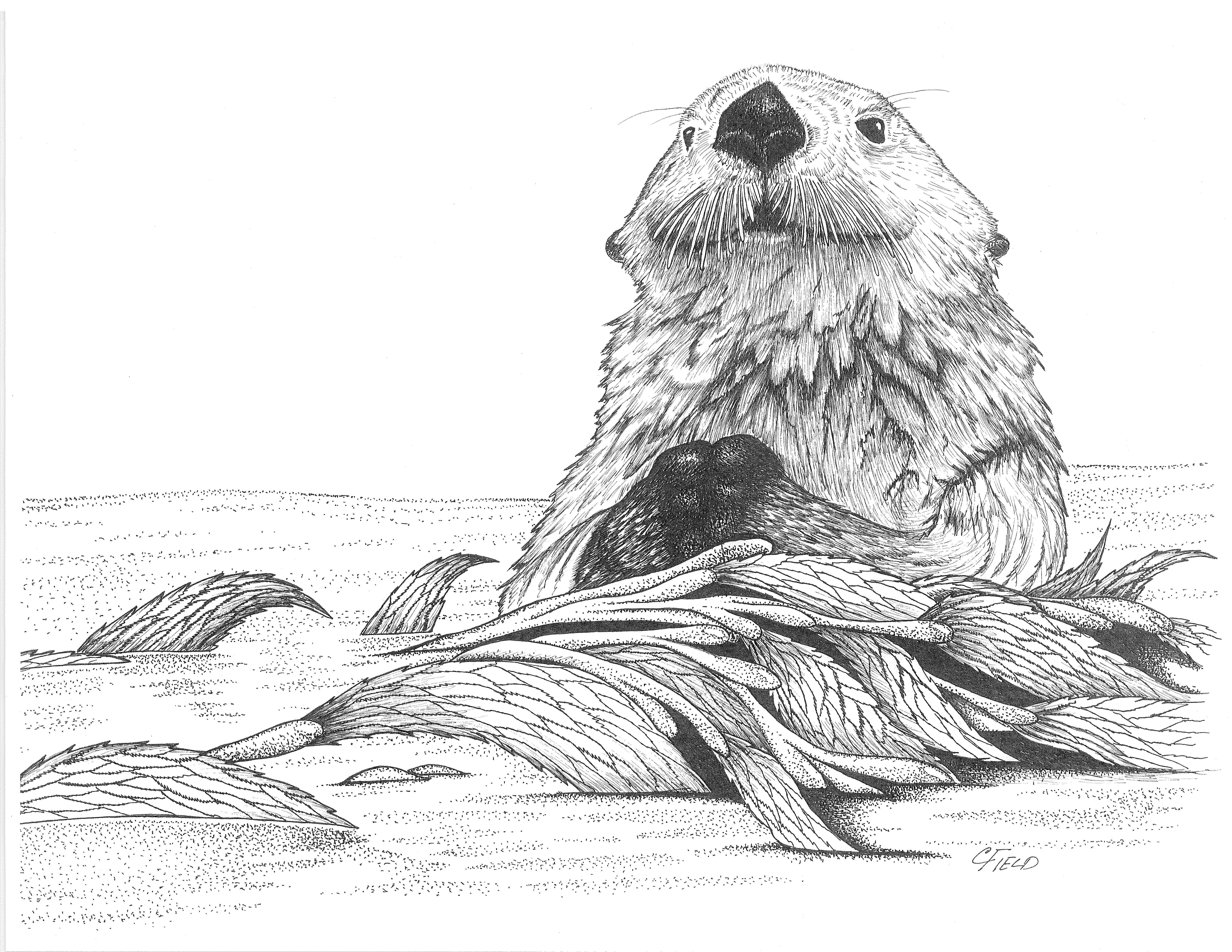 Sea Otter Entangled